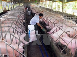 Đưa công nghệ blockchain vào quản lý chăn nuôi lợn