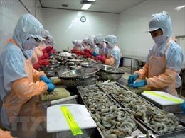 Xuất khẩu tôm của Cà Mau phục hồi nhanh sau dịch COVID-19