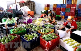 Xuất khẩu rau quả giảm 5,8%