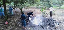 Bình Phước kiểm soát chặt dịch tả lợn châu Phi