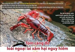 Tôm càng đỏ - loài ngoại lai xâm hại nguy hiểm