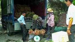 Quảng Ninh xúc tiến thương mại cho quả vải chín sớm Phương Nam