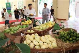 Khai mạc tuần lễ xoài và nông sản an toàn tỉnh Sơn La tại Hà Nội
