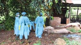 Khảo nghiệm vắc xin phòng dịch tả lợn châu Phi đạt kết quả khả quan