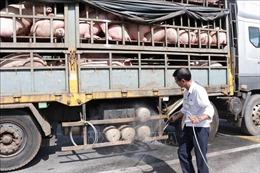 Cao Bằng kiểm soát chặt việc vận chuyển lợn