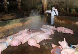 Lập nhiều chốt chặn, kiểm soát việc vận chuyển và giết mổ lợn tránh dịch lây lan