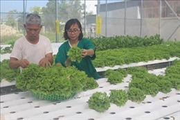 Trồng rau thủy canh - hướng phát triển nông nghiệp sạch tại Thanh Hóa