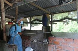 Dịch tả lợn châu Phi tại Trà Vinh diễn biến phức tạp