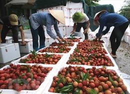 Xuất khẩu trên 13.000 tấn quả vải tươi qua cửa khẩu Tân Thanh