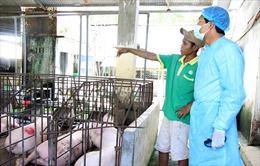 Dịch tả lợn châu Phi tiếp tục lan rộng ở Bình Thuận