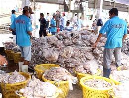Bà Rịa-Vũng Tàu cần thực hiện tốt hơn việc truy xuất nguồn gốc hải sản tại các cảng cá
