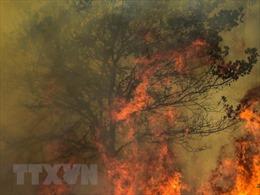 Mỹ sơ tán dân ở bang lạnh giá Alaska do cháy rừng