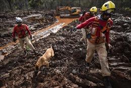 Yêu cầu Vale SA phải bồi thường toàn bộ thiệt hại vụ vỡ đập tại Brazil