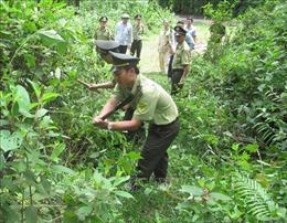 Phát triển kinh tế rừng, nâng cao thu nhập cho người dân
