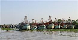 Không đăng kiểm tàu cá đánh dấu sai quy định