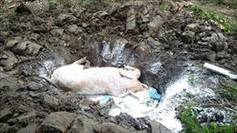 Lén lút trong đêm vứt bỏ lợn chết ra môi trường