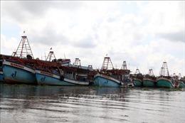 Giải pháp nào cho tàu cá 'nằm bờ'trở lại biển?