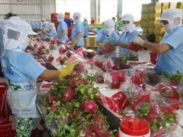 Tìm giải pháp tăng tính cạnh tranh cho chuỗi cung ứng nông sản