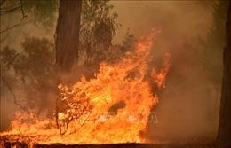 Cháy rừng ở Australia diễn biến nguy hiểm trong đợt nghỉ lễ cuối năm
