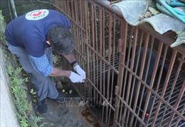 Giải cứu chú gấu ngựa bị nuôi nhốt 30 năm ở Sơn La
