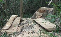 Vụ phá rừng đặc dụng tại Đắk Lắk: Cần làm rõ những điểm bất thường