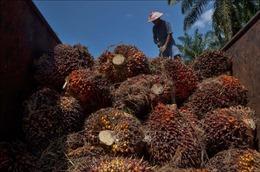 Tổng thống Indonesia chỉ trích EU hạn chế nhập dầu cọ