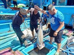 Tạo thương hiệu cho cá ngừ Việt Nam