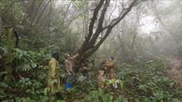 Đa dạng hóa đầu tư cho rừng đặc dụng - Bài 1: Từng bước tự chủ tài chính cho rừng
