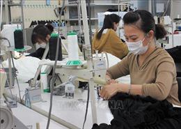 Chưa có thực tập sinh Việt Nam nào tại Nhật Bản bị lây nhiễm SARS-CoV-2