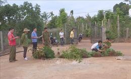 Liên tiếp phát hiện 3 gia đình trồng cần sa trái phép ở Đắk Lắk
