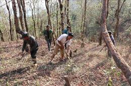 Lai Châu: Huyện Phong Thổ tăng cường phòng chống cháy rừng