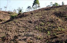 Tuyên Quang: Rừng phòng hộ thôn Lăng Chua bị chặt phá trơ trọi