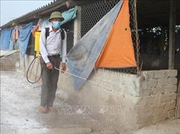 Ngăn chặn sự lây lan của dịch cúm gia cầm