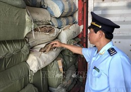 Phát hiện 5 container nghi là dược liệu nhập lậu tại cảng Tiên Sa