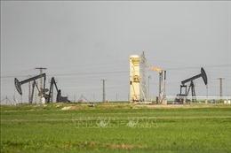 Giá dầu châu Á sụt giảm trong phiên 11/6