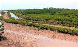 Thành lập Khu bảo tồn thiên nhiên đất ngập nước Thái Thụy