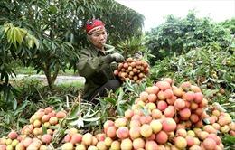Đưa nông sản, thực phẩm Việt tiến sâu vào thị trường Trung Quốc