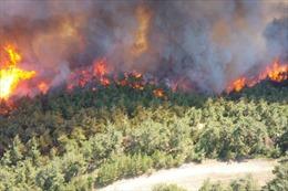 Thổ Nhĩ Kỳ: Cháy rừng lan mạnh trên bán bán đảo Gallipoli