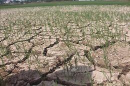 Gần 55.000 ha cây trồng ở Trung Bộ bị hạn hán, thiếu nước