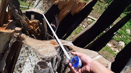 Khởi tố 8 bị can liên quan vụ phá rừng tại huyện Kbang, Gia Lai