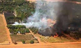 Vùng đầm lầy nhiệt đới lớn nhất thế giới hứng chịu hỏa hoạn kỷ lục trong tháng 7