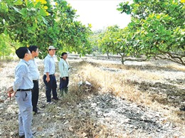 Tái cơ cấu nông nghiệp gắn với ứng dụng công nghệ cao