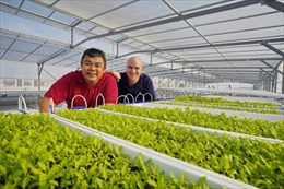 Singapore nhân rộng mô hình trồng rau trên sân thượng