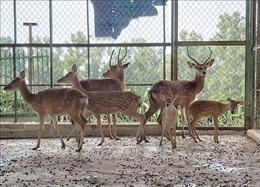 Gây nuôi và quản lý động vật hoang dã - Bài cuối: Còn nhiều bất cập trong quản lý