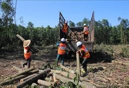 Tạo nguồn nguyên liệu gỗ chất lượng - Bài 2: Khuyến khích nhưng người dân chưa thích