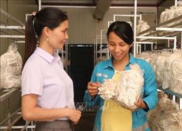 Nhân Ngày Phụ nữ Việt Nam 20/10: Người phụ nữ làm giàu từ cây nấm