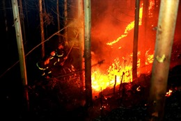 Điều tra nguyên nhân vụ cháy rừng trồng tạiPhúc Yên, Vĩnh Phúc