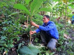 Thanh niên huyện biên giới Mường Lát trồng rừng phòng, chống thiên tai