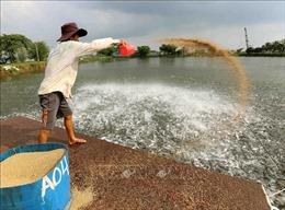 VASEP khuyến cáo xuất khẩu cá tra sang Trung Quốc không chào bán giá thấp