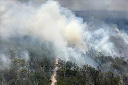 Cháy rừng thiêu rụi gần một nửa diện tích hòn đảo di sản thế giới Fraser
